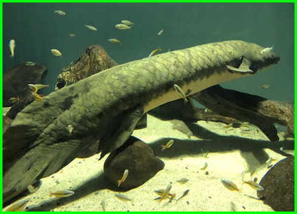 berapa lama umur ikan hias, ikan hias yang umur panjang, ikan hias umur panjang, ikan hias yang umurnya panjang, ikan hias dengan umur panjang, ikan hias kecil umur panjang, jenis ikan hias umur panjang, ikan hias air tawar umur panjang, ikan hias paling panjang umur, ikan hias yg panjang umur