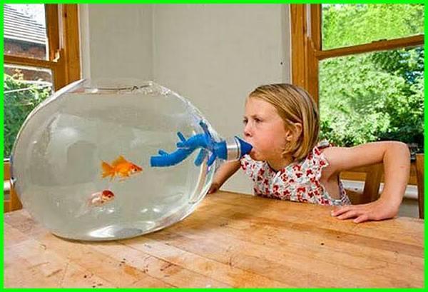 berapa lama aquarium baru bisa diisi ikan, kenapa aquarium bau amis, kenapa air akuarium bau amis, kenapa air akuarium bau, kenapa aquarium berlumut, penyebab aquarium bau amis, penyebab aquarium bau
