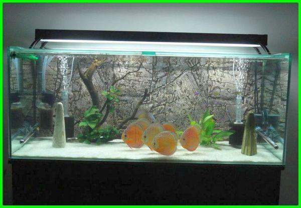 lampu aquarium dimatikan, fungsi lampu aquarium, foto lampu aquarium, gambar lampu aquarium, lampu hias aquarium, lampu hiasan aquarium, pengaruh lampu akuarium pada ikan