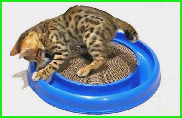 mainan kucing cakar cakaran, mainan cakaran kucing