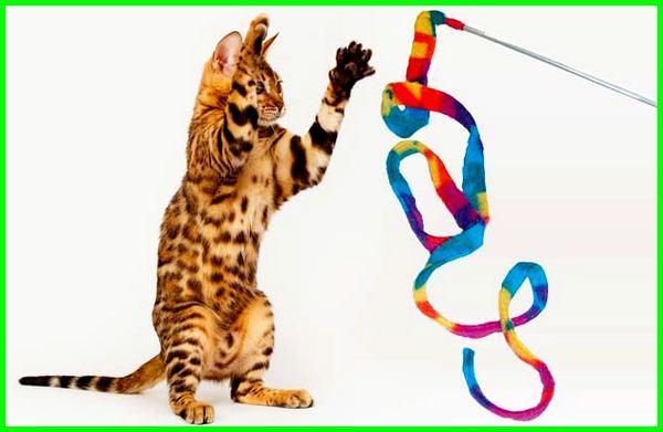 mainan kucing apa saja, jenis mainan kucing, jenis mainan kucing persia, apa mainan kesukaan kucing, mainan apa yang disukai kucing, bagaimana membuat mainan kucing, bagaimana cara membuat mainan kucing