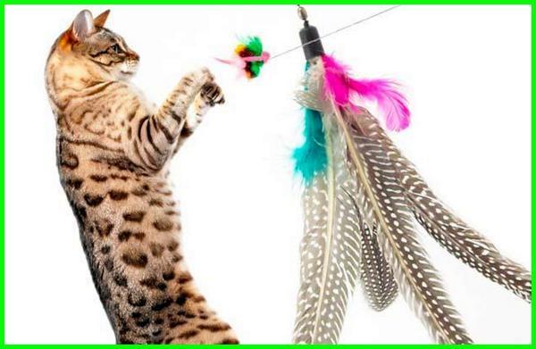 mainan kucing apa, mainan kucing buatan sendiri, mainan kucing bergerak, mainan kucing catnip, mainan kucing tom cat, diy mainan kucing, diy tempat mainan kucing, diy mainan anak kucing, diy membuat mainan kucing, mainan kucing free, mainan favorit kucing