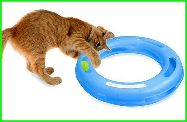 mainan kucing game,mainan hewan kucing, mainan kucing jogja, jenis mainan kucing, jual mainan kucing jogja, mainan kucing keren, kucing mainan makanan, mainan kucing otomatis
