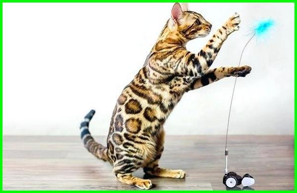 mainan kucing shopee, mainan kucing murah, mainan kucing bergerak, mainan kucing cat, mainan favorit kucing, fungsi mainan kucing, mainan kucing gambar, mainan hewan kucing, jenis mainan kucing