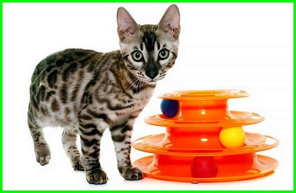 mainan kucing bola berjalan, mainan kucing bola otomatis, mainan untuk kucing