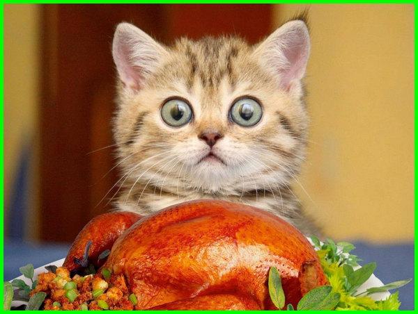 makanan manusia yang disukai kucing, makanan manusia yang cocok untuk anak kucing, makanan kucing bisa dimakan manusia, makanan manusia yang bagus untuk kucing, makanan kucing dimakan manusia, makanan kucing yang sama dengan manusia, gambar kucing kaget terkejut lucu,