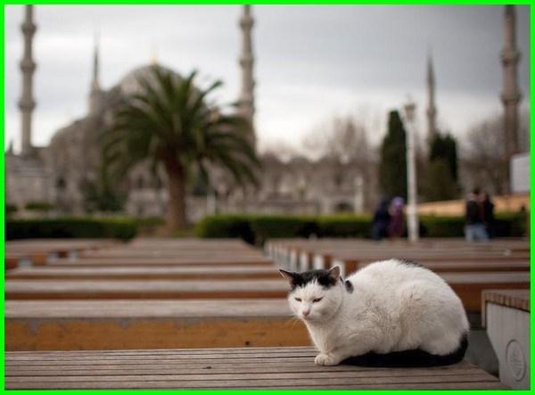 nama nama kucing bahasa arab, nama nama kucing betina arab, nama nama kucing di arab, nama kucing betina bahasa arab, nama arab untuk kucing, nama kucing yang bagus bahasa arab