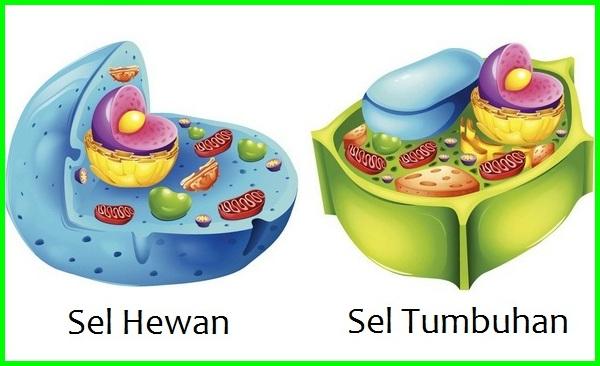 sel hewan dan sel tumbuhan, perbedaan sel tumbuhan dan sel hewan, perbedaan sel hewan dan tumbuhan brainly, perbedaan sel hewan an tumbuhan, perbedaan sel hewan dengan sel tumbuhan adalah, perbedaan antara sel hewan tumbuhan, apa perbedaan sel hewan dan tumbuhan, apa perbedaan sel hewan dan tumbuhan brainly, apa perbedaan sel hewan dengan tumbuhan, perbedaan sel hewan dan tumbuhan.com