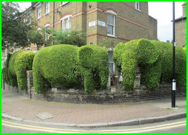 tanaman yang bisa dibentuk huruf hewan dan binatang, tanaman yang dapat dibentuk, tanaman yang bisa dibentuk bonsai, tanaman hias yang bisa dibentuk, tanaman hias yg bisa dibentuk, tanaman hias yang mudah dibentuk