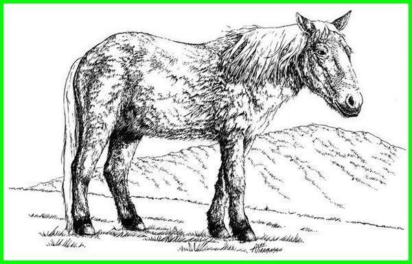 hewan zaman es yang masih hidup, hewan di zaman es, hewan pada zaman es, daftar hewan zaman es, gambar hewan zaman es, foto hewan zaman es, hewan yang hidup di zaman es, hewan yang hidup pada zaman es, hewan hewan zaman es, hewan hewan di zaman es