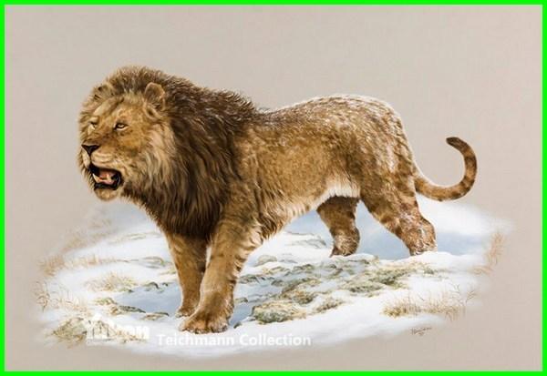 foto hewan zaman es, hewan yang hidup di zaman es, hewan yang hidup pada zaman es, hewan hewan zaman es, hewan hewan di zaman es