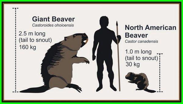 hewan purba zaman es, hewan di zaman es, hewan pada zaman es, daftar hewan zaman es, gambar hewan zaman es