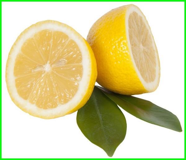 macam macam jeruk lemon, macam jenis jeruk lemon, macam jenis buah lemon, macam macam jenis jeruk lemon, macam-macam jenis jeruk lemon, jenis jeruk lemon dan gambarnya, macam-macam jeruk lemon, jenis jeruk lemon terbaik