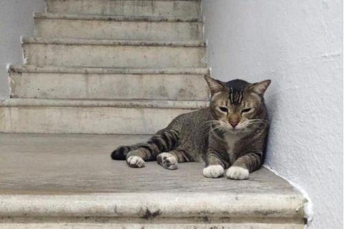 Kucing Dicuri