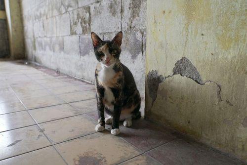 Kucing Hilang