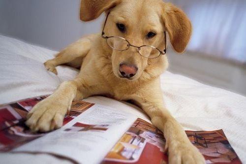 Anjing Cerdas