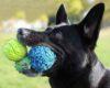 Anjing terobsesi bola