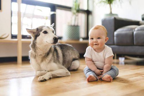 Bayi dan Anjing