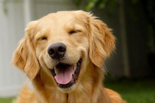 Foto anjing tersenyum