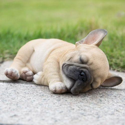 Gambar Anjing French Bulldog