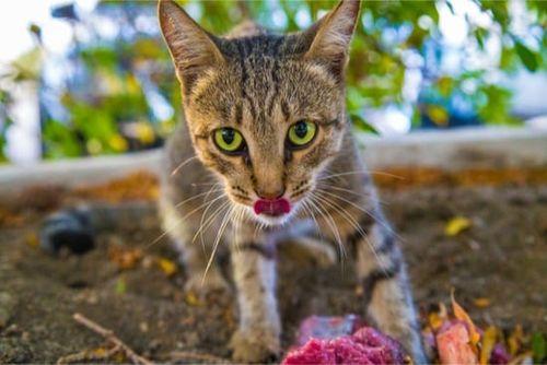 Kucing Nakal