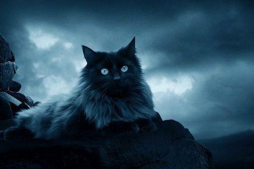 Kucing di Malam Hari