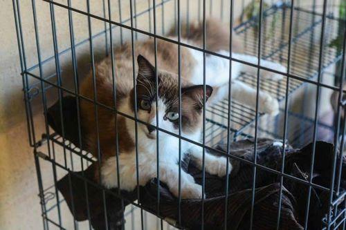 Mengurung Kucing