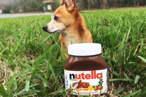 Nutella untuk anjing