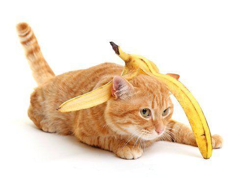 Pisang kucing