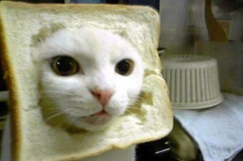 Roti Kucing
