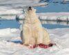 Beruang kutub1
