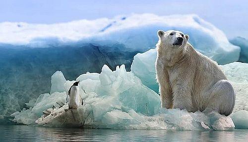 Beruang kutub3