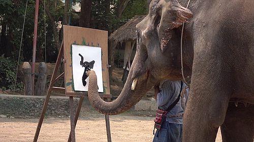 Gajah cerdas