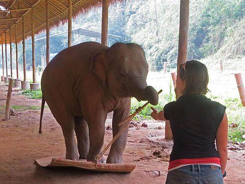 Gajah pinter