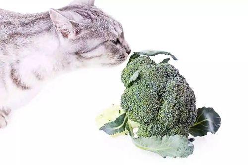 Kucing dan Brokoli